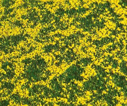 Rapeseed field grass segment Faller
